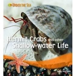 Under the Sea - Hermit Crabs