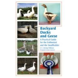 Backyard Ducks and Geese